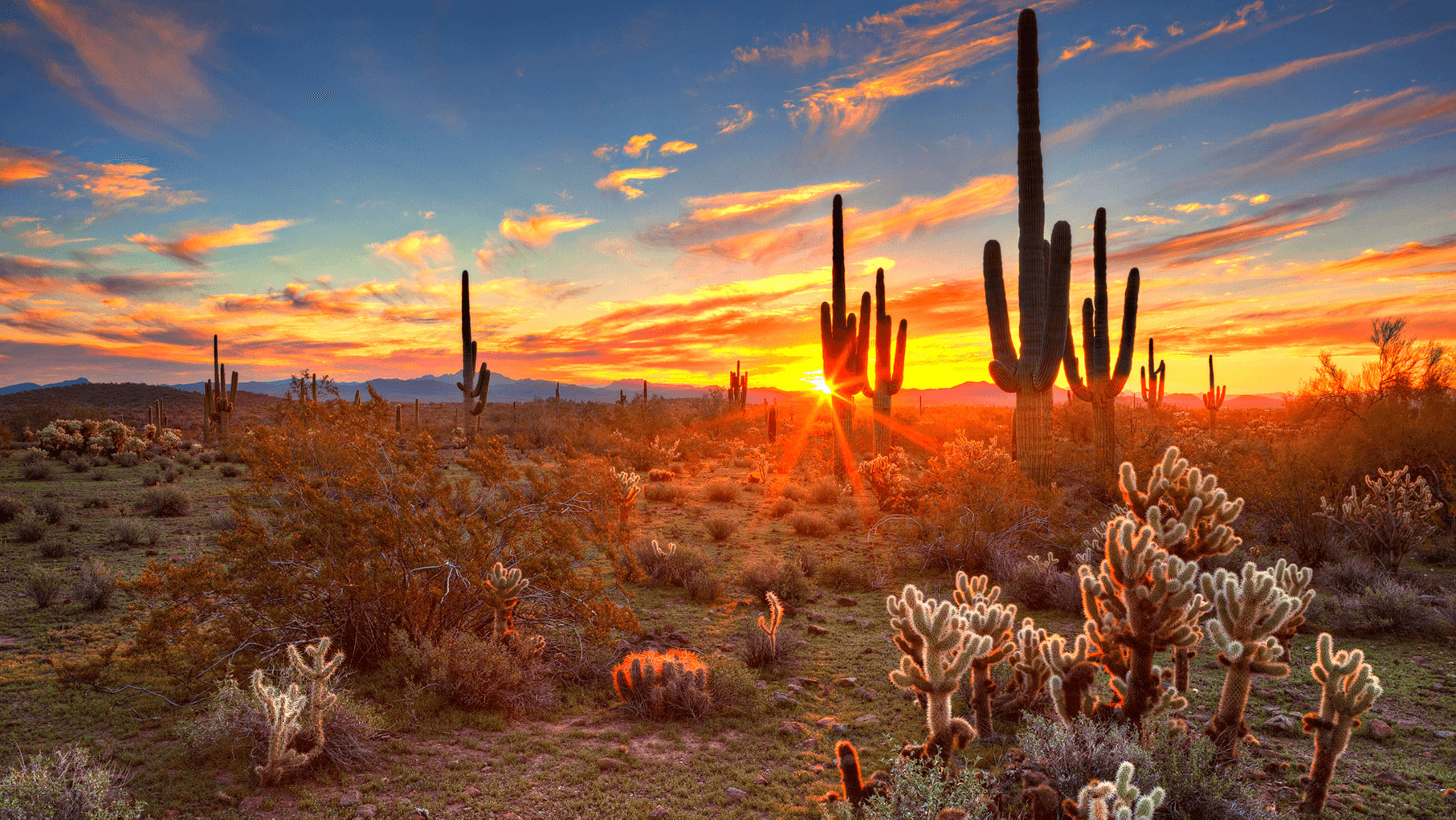 Sunset over desert cacti.